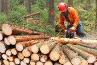 logger, lumberjack, logging