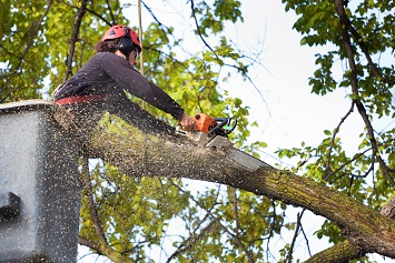 Tree care worker