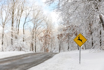 A deer crossing street sign on an icy road