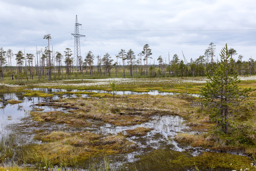 Power lines in wetlands, Nationwide Permits, Clean Water Act