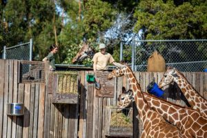 fall protection zoo workers