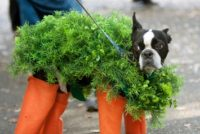 Dog Dressed In Chia Pet Costume