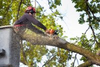 Subject: A tree surgeon arborist expert working on removing a tree branch with chain saw and heavy equipment.