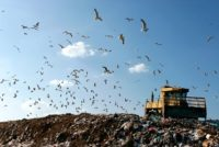 Gulls flying over landfill
