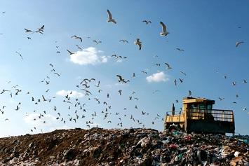 Gulls flying over landfill