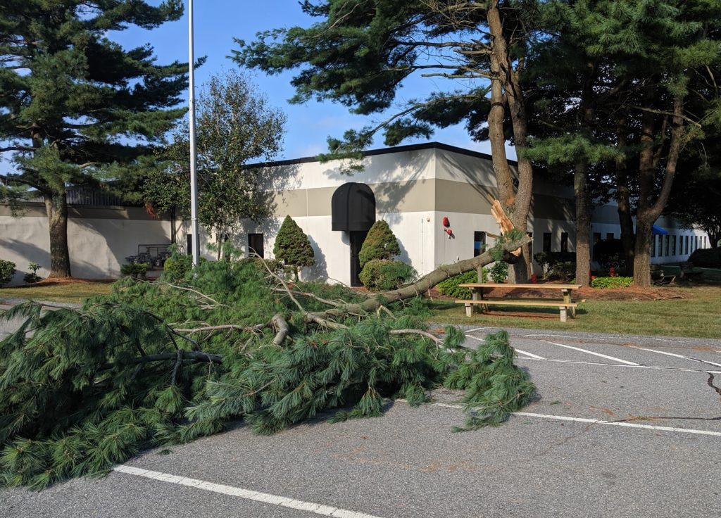 Fallen tree limb at facility