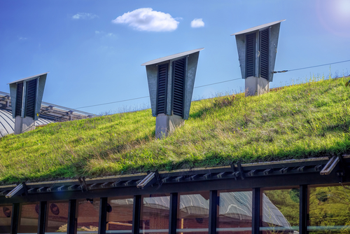 A green 'living' roof on a public library